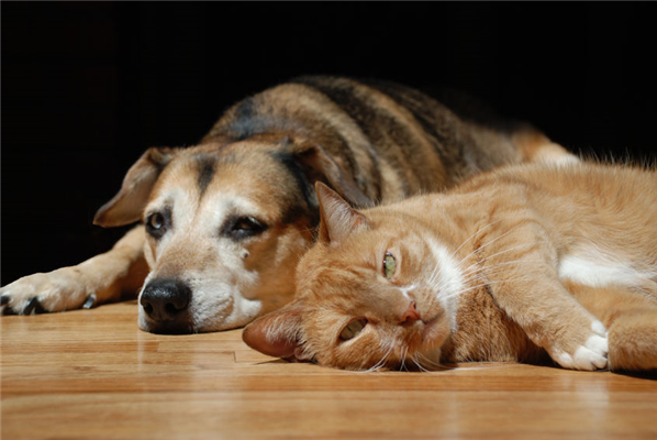 Top Three Pet-Friendly Hardwood Floors