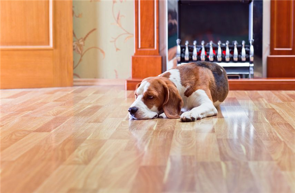 Pets and Hardwood Flooring: Is It a Lost Cause?